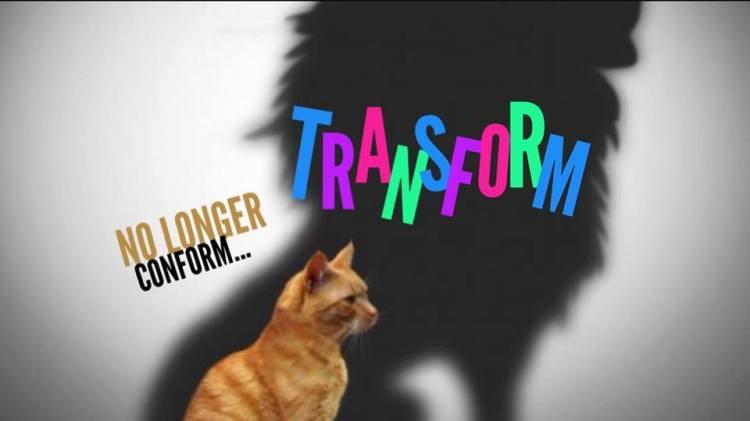 transform_zpssuy2osoe